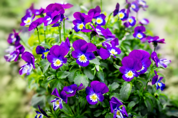 Violets are flowers that mean love & devotion.